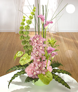 Sophistication arrangement
