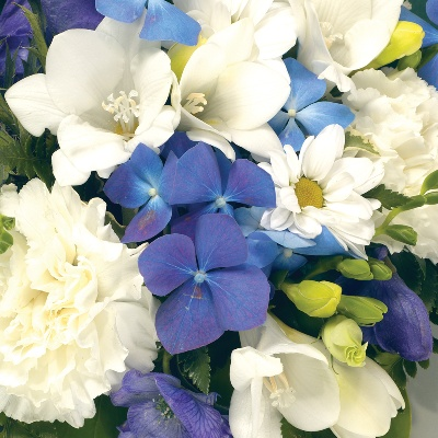 Posy  Blue and White