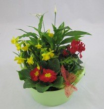 Spring cheer planted bowl