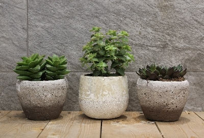 3 Small Succulents in Pots
